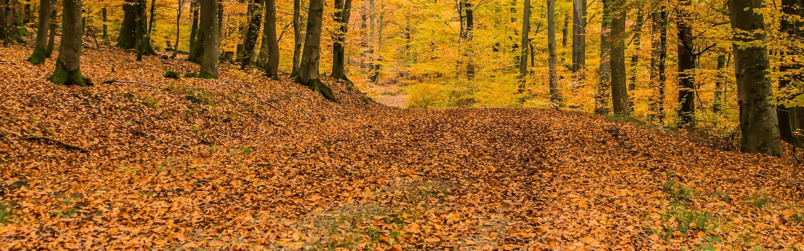 photo of an eastern deciduous forest